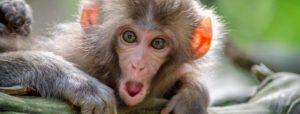 Mailchimp - sikke en sød abe postmand